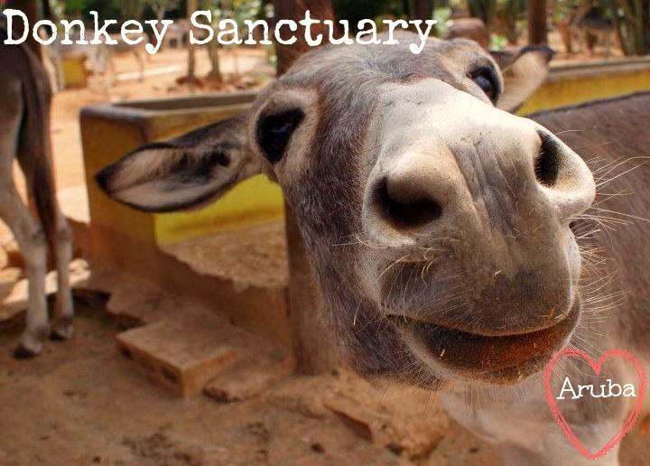 Aruba; Donkey Sanctuary
