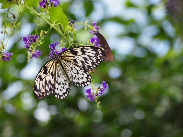 Vlinders kijken op Aruba's butterfly farm