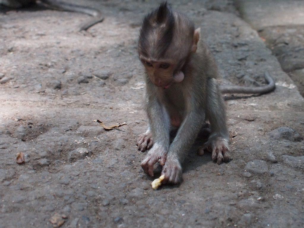 Het Magische Monkey Forest Ubud