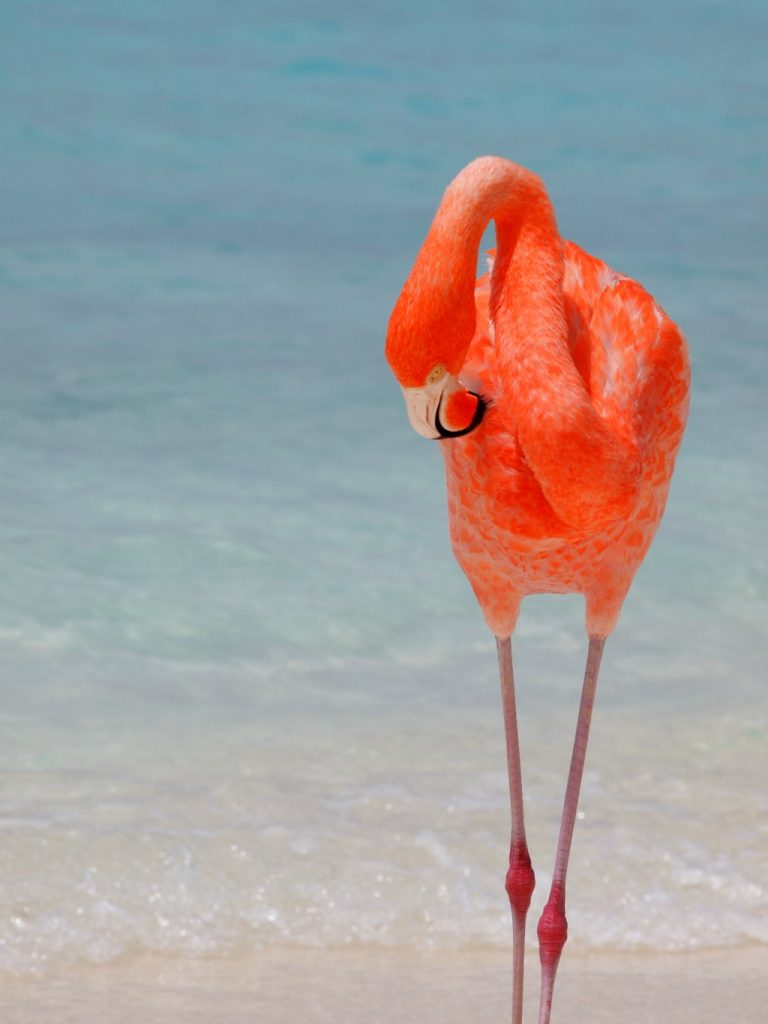 Mooiste stranden van Aruba