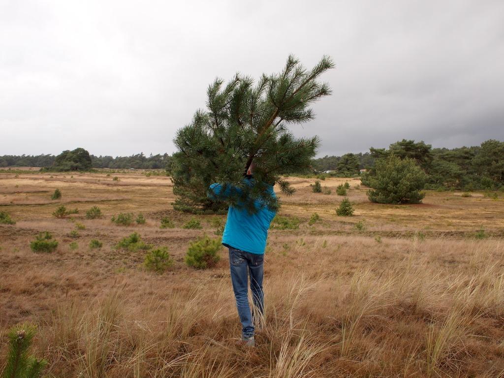 Zelf je kerstboom kappen op de Veluwe!